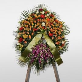Corona Dendrobium