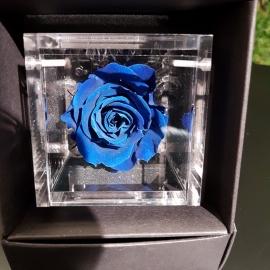 FLOWERCUBE 6X6 ROSA BLU