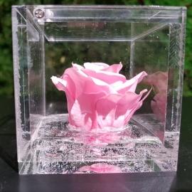 FLOWERCUBE 6X6 ROSA ROSA