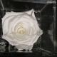 FLOWERCUBE 8X8 ROSA BIANCO