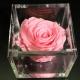 FLOWERCUBE 8X8 ROSA ROSA
