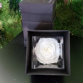 FLOWERCUBE 10X10 ROSA BIANCO