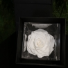 FLOWERCUBE 12X12 ROSA BIANCO