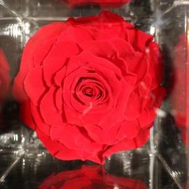 FLOWERCUBE 12X12 ROSA ROSSO