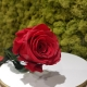 FLOWERCUBE 8X8 ROSA RAINBOW