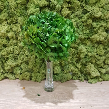 HYDRANGEA STANDARD OLIVE GREEN