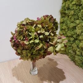 HYDRANGEA STANDARD PURPLE-GREEN