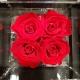 FLOWERCUBE 4  ROSE