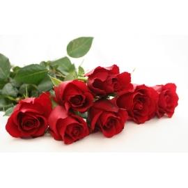 Rose Rosse Stelo Lungo 5 steli