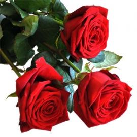 Rose Rosse Stelo Lungo 3 steli