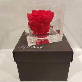 FLOWERCUBE 8X8 ROSA ROSSO