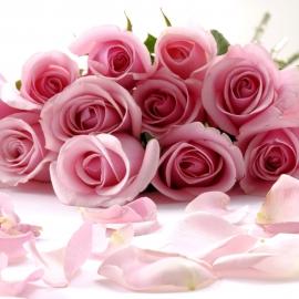 Fascio di rose rosa h70-80 quantità a scelta
