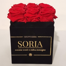 Scatola (Flower box) con rose Fresche.h.15