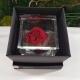 FLOWERCUBE 8X8 ROSA INGLESE RED