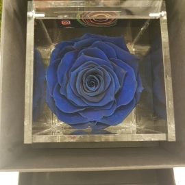 FLOWERCUBE 10X10 ROSA BLU