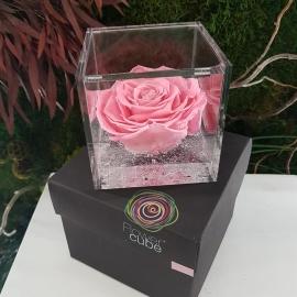 FLOWERCUBE 10X10 ROSA ROSA