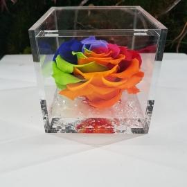 FLOWERCUBE 10X10 ROSA  RAINBOW