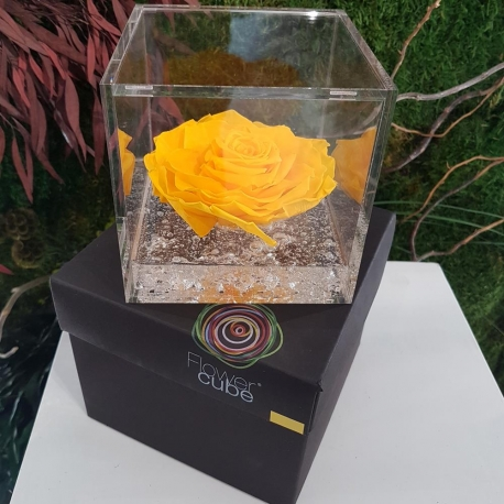 FLOWERCUBE 12X12 ROSA GIALLO