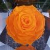 FLOWERCUBE 12X12 ROSA ARANCIO