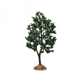 Alder Tree (Albero di Ontano)