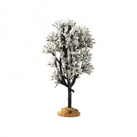 White Hawthorn Tree (Biancospino innevato)