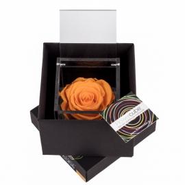 FLOWERCUBE 8X8 ROSA ARANCIO