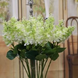 6 Fiore di Lillà