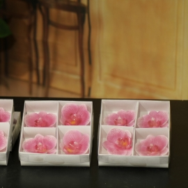 BOX 4 CANDELE PHALENOPSIS FLOATING