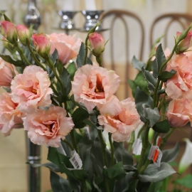 "25"" LISIANTHUS SPRAY,2F,2B-PINK"