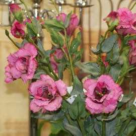 "25"" LISIANTHUS SPRAY,2F,2B-Beatuy"