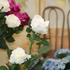 ROSA ALICE-WHITE