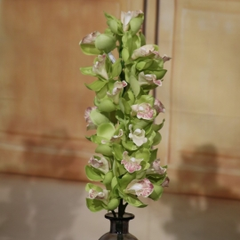 CYMBIDIUM SPRAY 21 FL  GREEN