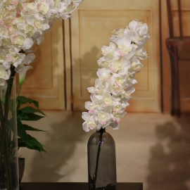 CYMBIDIUM SPRAY 21 FL WHITE