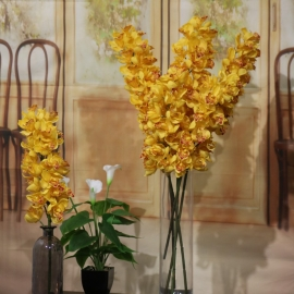 CYMBIDIUM SPRAY 21 FL YELLOW