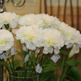 Garofano SINGLE CARNATION WHITE