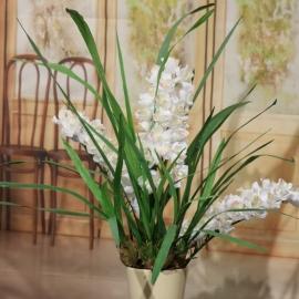 CYMBIDIUM SPRAY plant 3 FL  WHITE