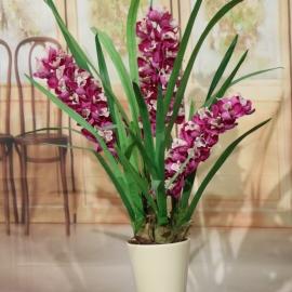CYMBIDIUM SPRAY plant 3 FL  BEAUTY